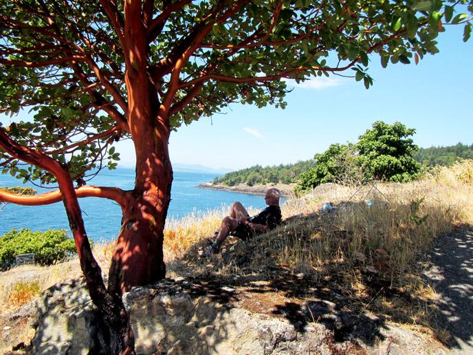 pacific madrone san juan island national historical park. Black Bedroom Furniture Sets. Home Design Ideas