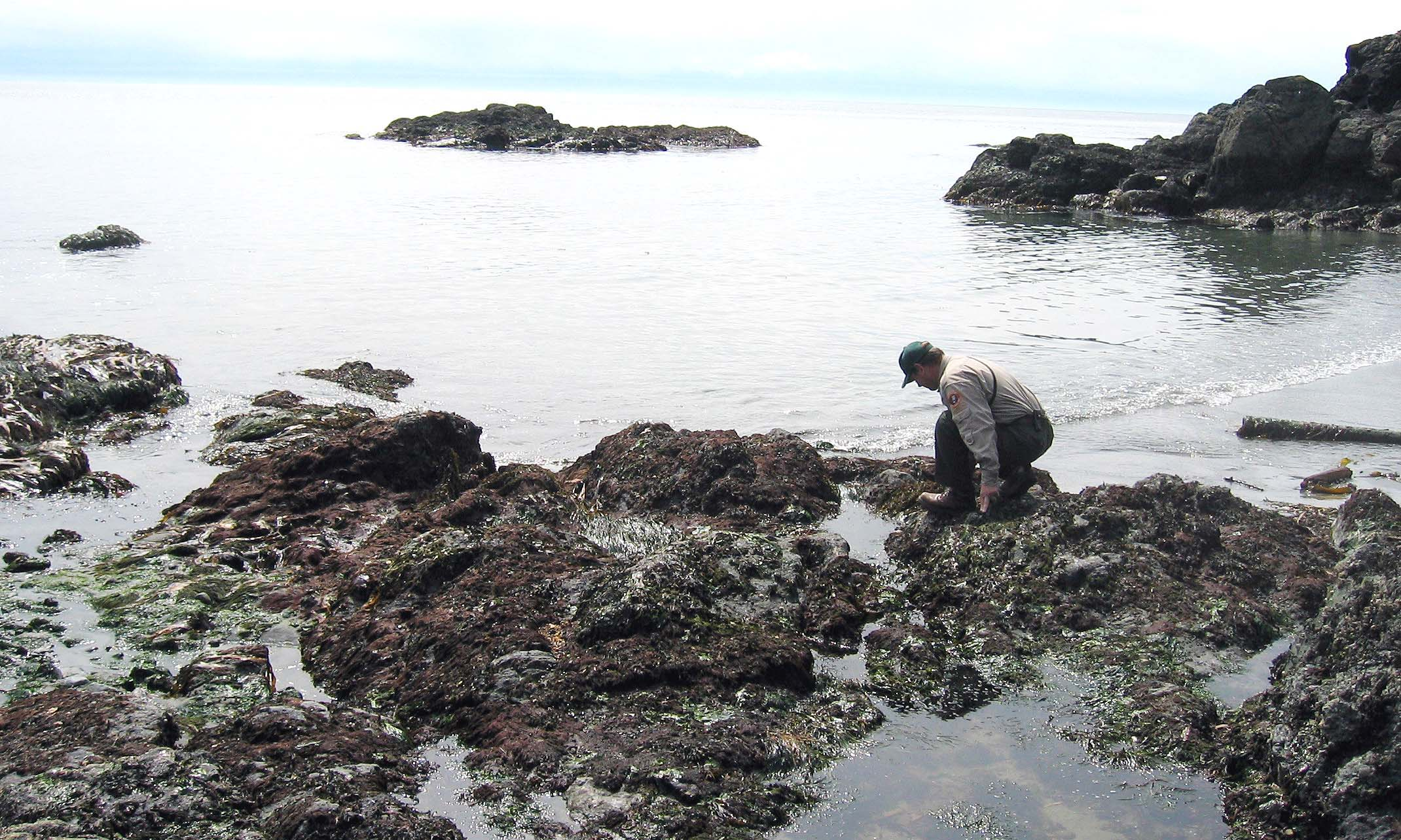 Tide Pool Grandmas Cove