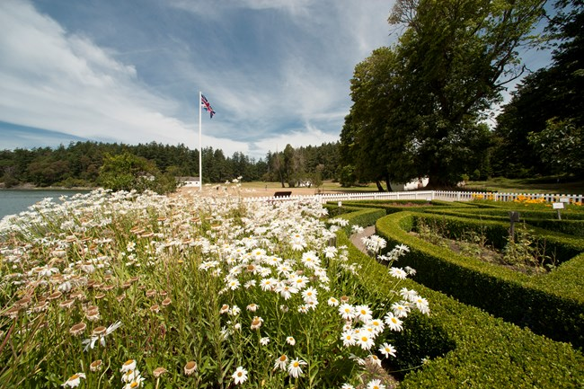 White flowers bloom in a historic garden.