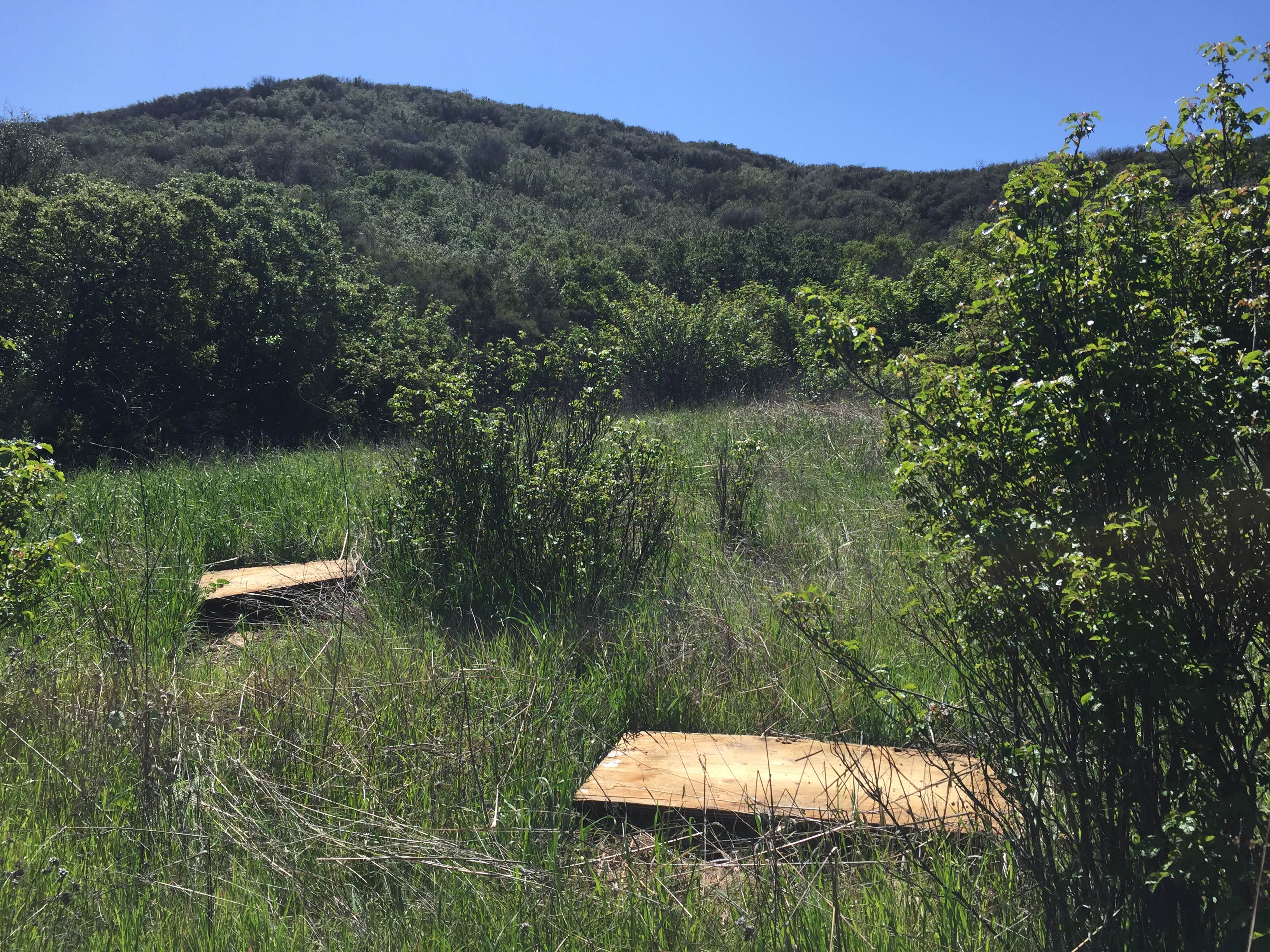 Plywood boards strewn in a field of grass in Decker Canyon of the Santa Monica Mountains. (Photo: National Park Service)