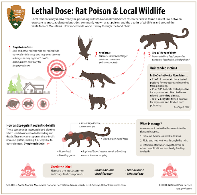 Infographic: Rat Poison and Local Wildlife