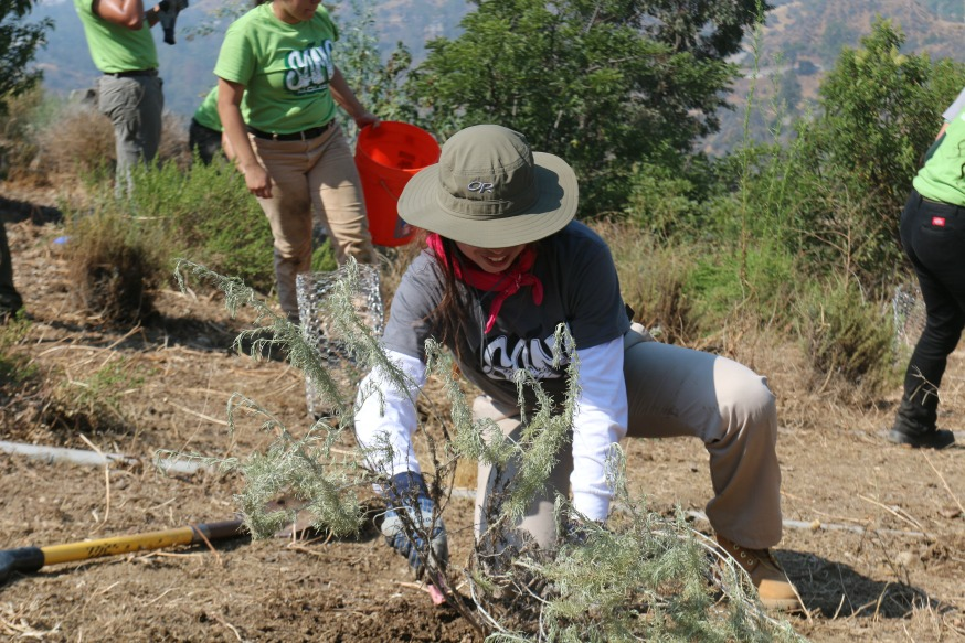 A SAMO Youth at Griffith Park works on habitat restoration.