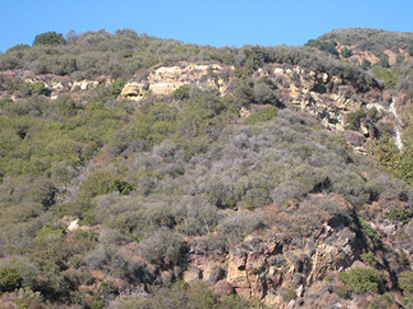 Recent record low rainfall years has produced areas of chaparral die-back.