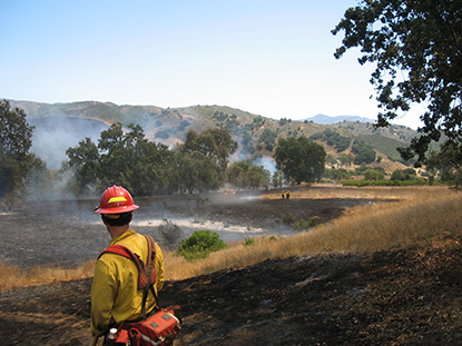 A firefighter looks over burned vegetation during a wildland fire.