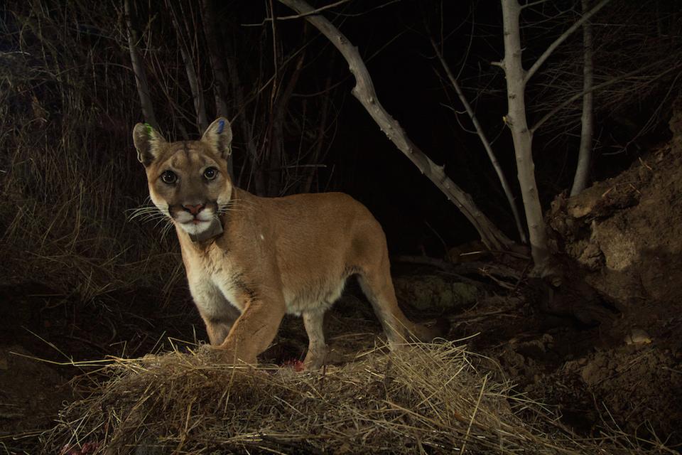 Смотреть monica lion
