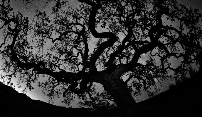 A large oak tree silhouetted against a bright, star-filled night sky