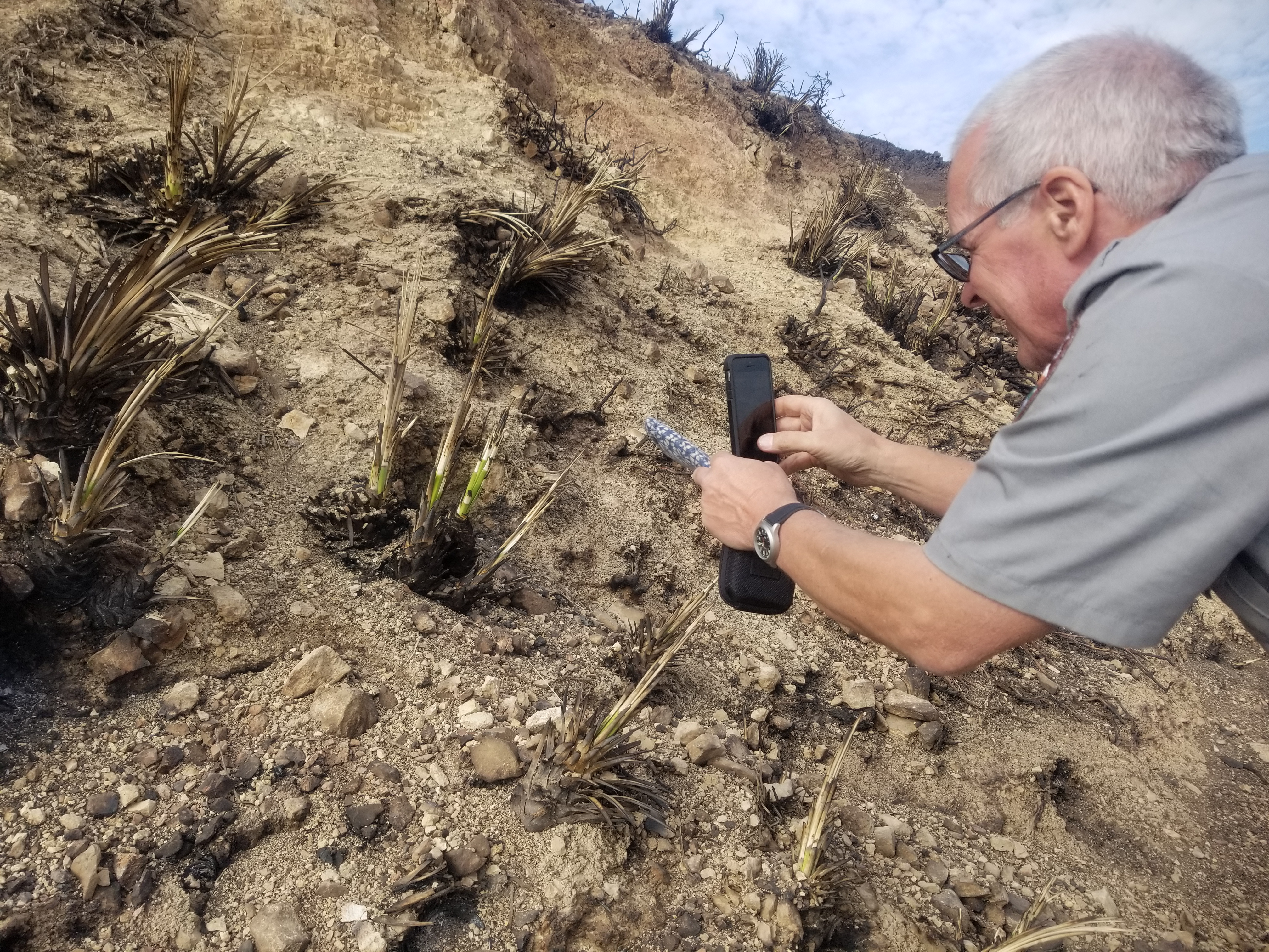 John Tiszler, a supervisory NPS plant biologist who has worked at Santa Monica Mountains National Recreation Area for 22 years, excitedly documenting his find.