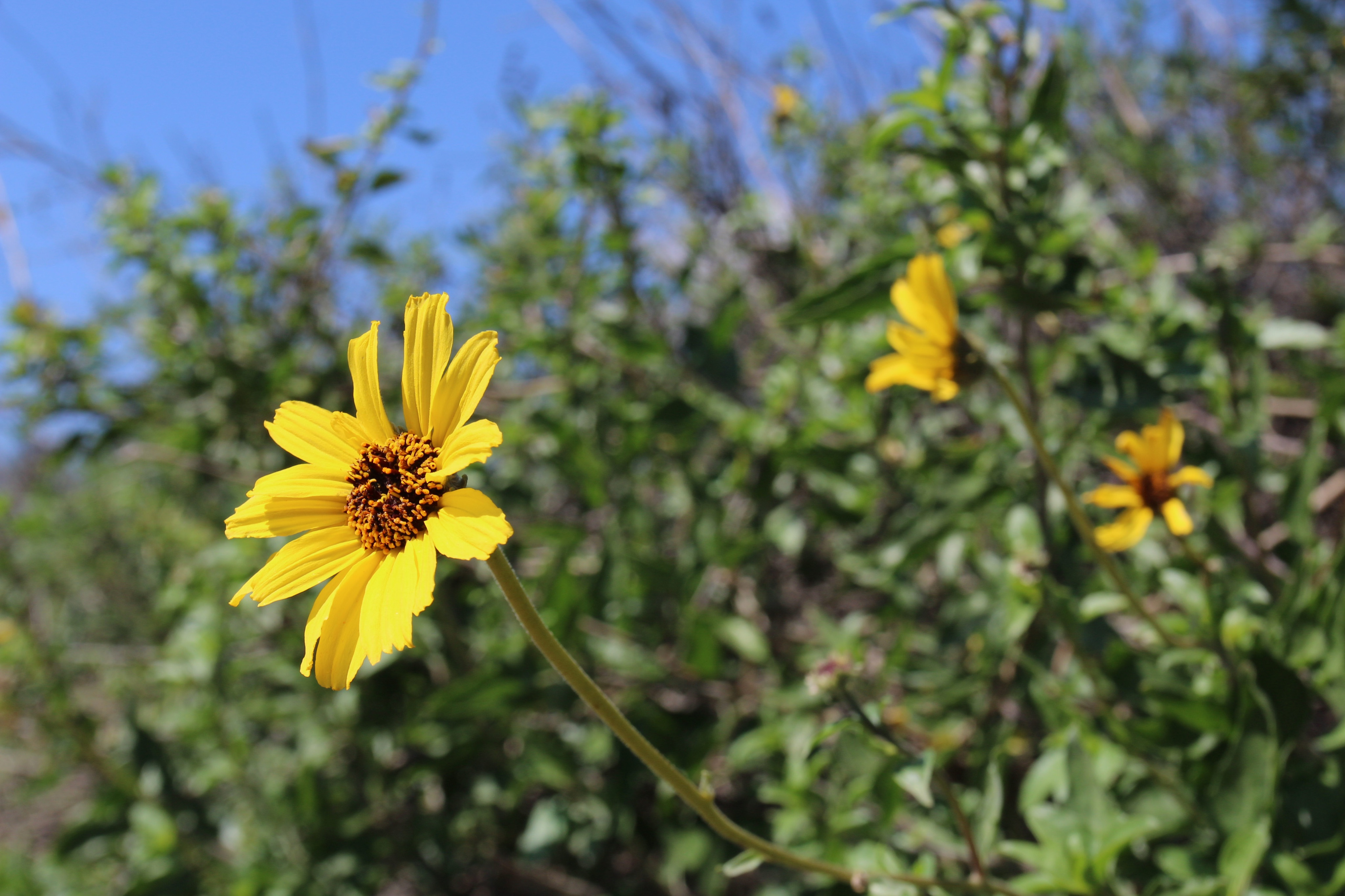 Wildflowers bloom along the trail