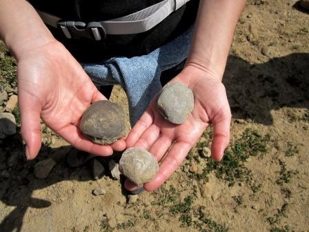 A visitor holds some bivalve fossils found on the Backbone Trail.