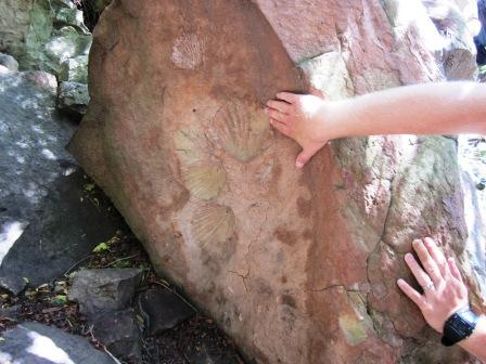 A hand is used for scale to show fossil imprints from a 20 million year old bivalve.