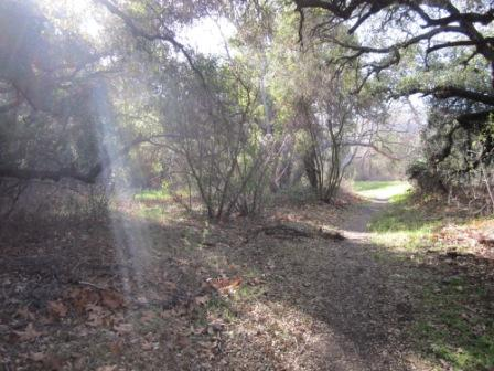 The Blue Canyon Trail is shaded by oak woodlands.