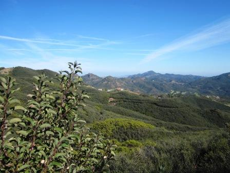 Chaparral can be experienced along the high ridges of the Backbone Trail
