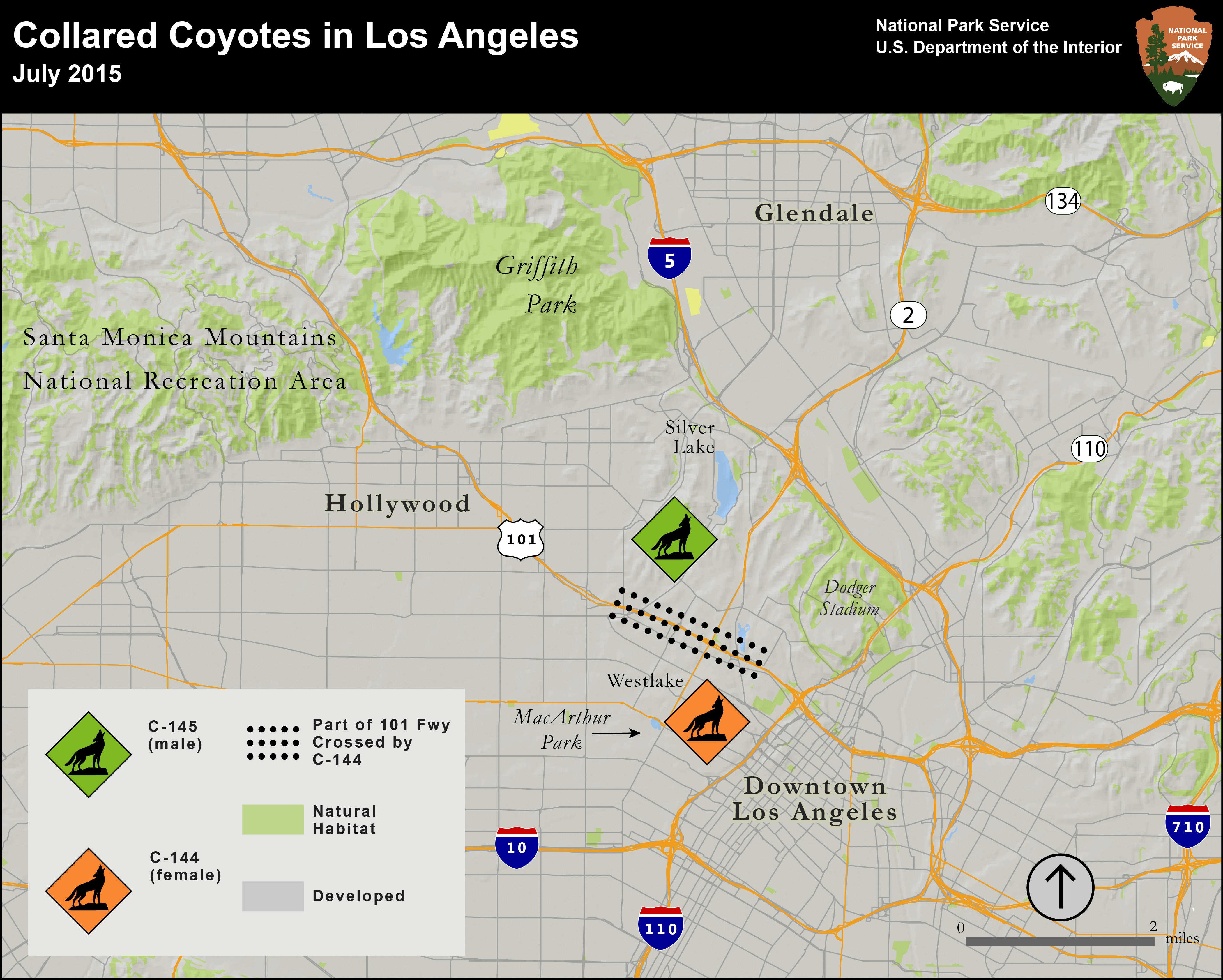 Coyotes Of LAs Urban Core Using Science To Separate Fact From - Los angeles map silver lake