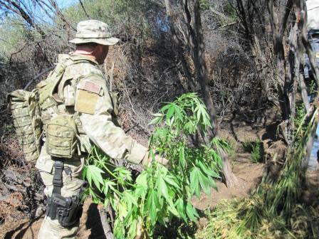 Park ranger cleans up a marijuana grow site in the Santa Monica Mountains_NPS photo