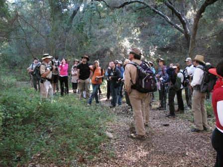 Hikers pause to learn about the dense oak woodland at the bottom of Trancas Canyon