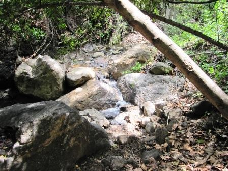 A small stream at the lunch spot along one of the water sheds in Cold Canyon.