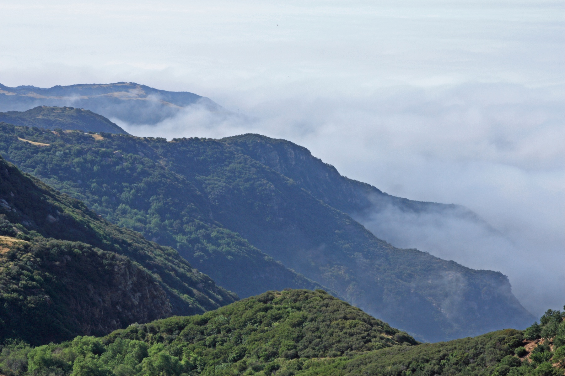 The Backbone Trail can provide views of green mountains high above costal fog.