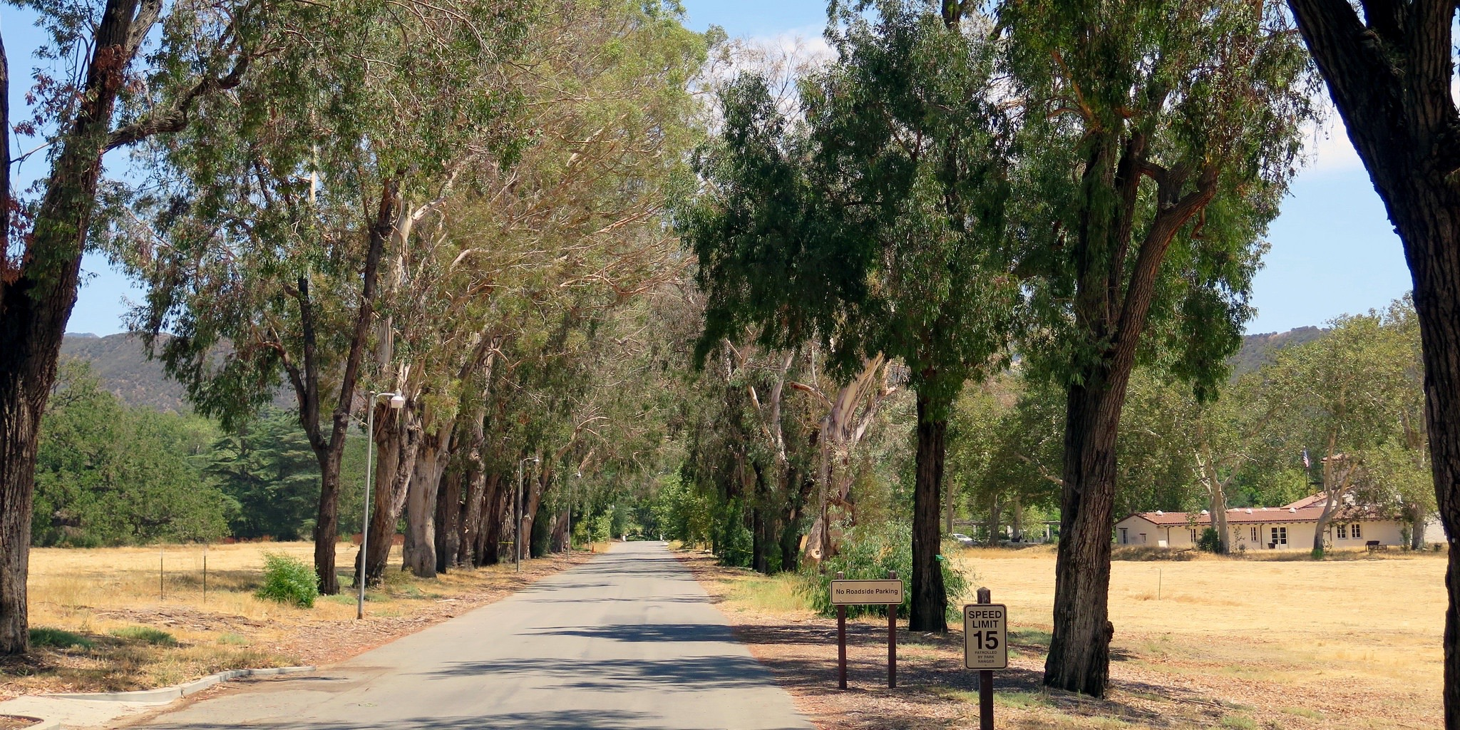 Drive on the beautiful driveway, under eucalyptus trees.
