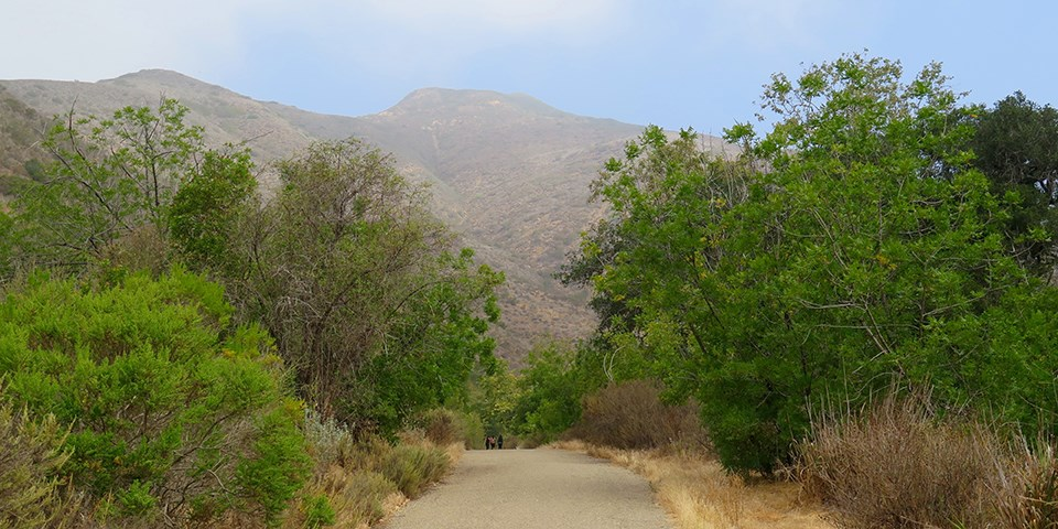 Solstice Canyon