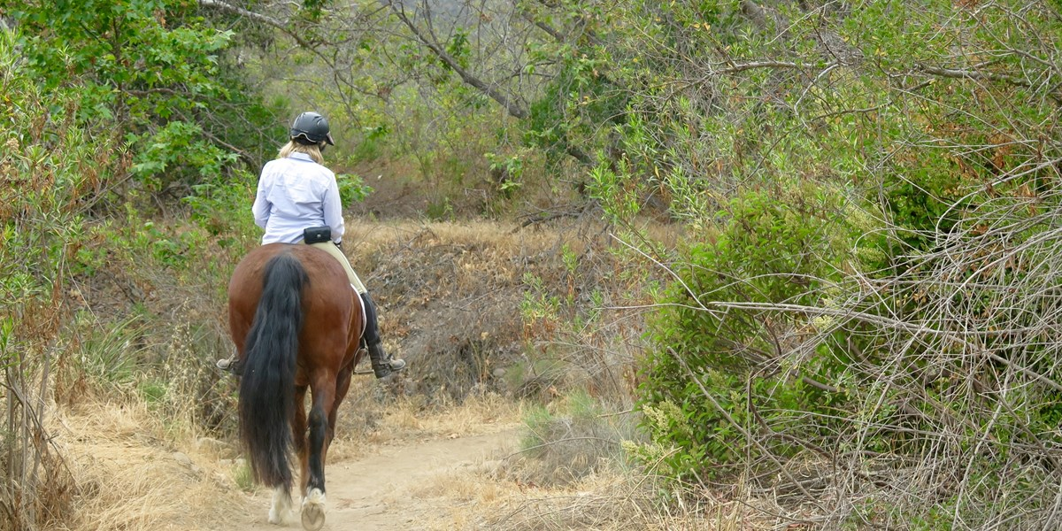 Horseback rider on the trail.