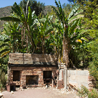 Ruins from an old ranch house are surrounded by tropical vegetation