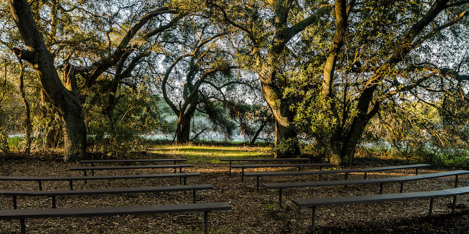 Benches under oak trees