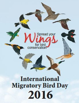 "Painting of eleven birds flying in a circle around text reading ""Spread your wings for bird conservation."" Text at bottom of image reads ""International Migratory Bird Day 2016."""