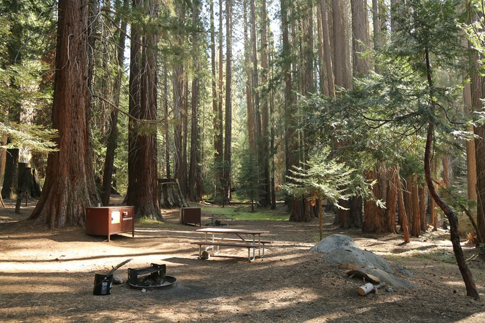 picnic tables, campfire rings, and bear proof lockers sit below sequoia trees