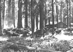 Cars in Giant Forest