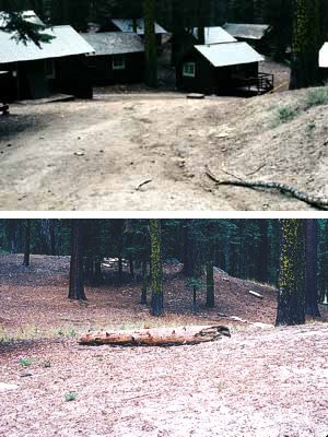 A restored zone (2004) in the former Giant Forest Lodge area.