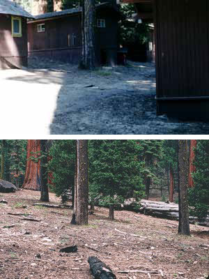 A restored area (2004) that once supported cabins (former Giant Forest Lodge area).