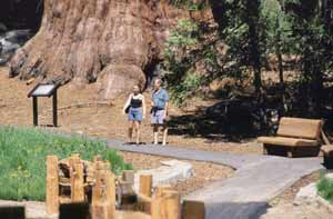 Two visitors pause on a trail before the base of a huge sequoia trunk.