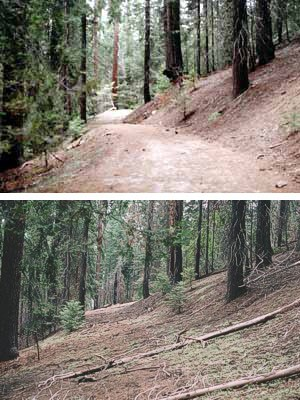 Above is a restored roadbed (2004) in the former Sugar Pine Campground at the north end of the Giant Forest developed area.