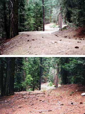Above is a restored roadbed (2004) in the former Sunset Campground at the north end of the Giant Forest developed area.