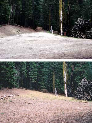 This series demonstrates how road beds near the Puzzle Tree have been restored (2004).