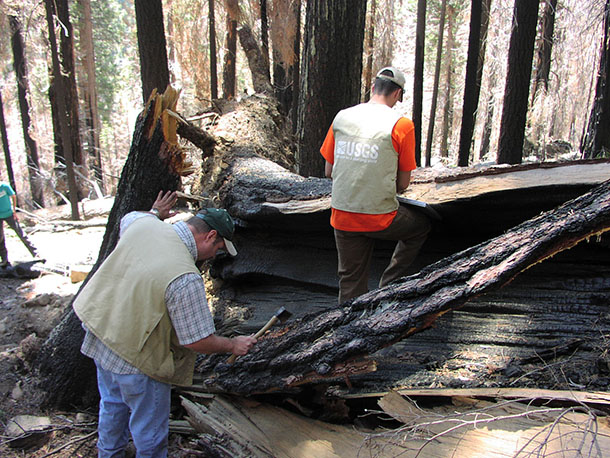 USGS biologists conduct bark beetle surveys in a forest plot.