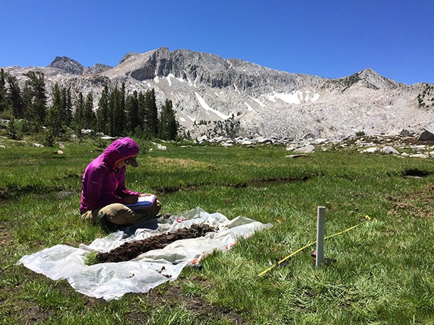 Field biologist examines wetland soil profile to characterize wetland type.