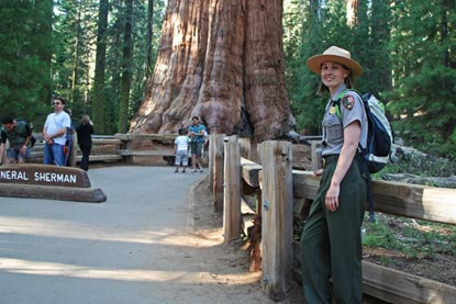 Ranger in front of giant tree
