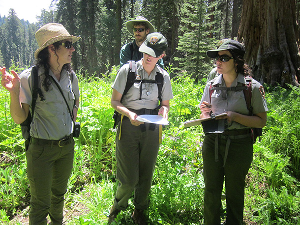 National Park Service biologists in a meadow discussing wetland mapping methods.