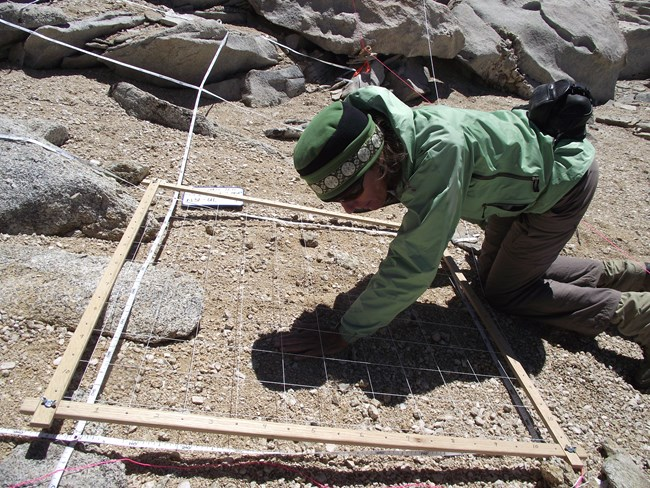 Scientist collects data at a Sequoia National Park alpine monitoring site.