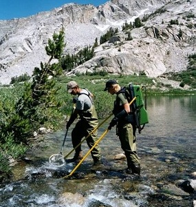 Electrofishing stream in Sequoia and Kings Canyon National Parks