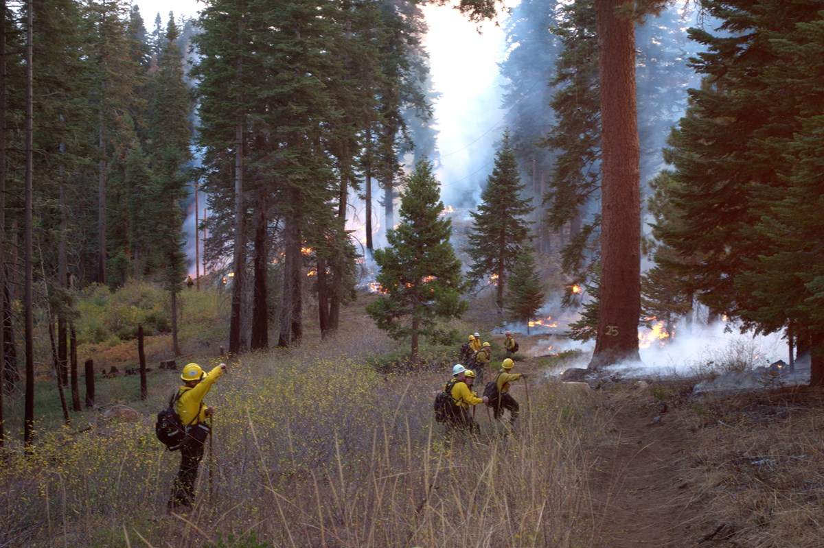 Fire staff along a fire line monitoring a prescribed burn in a conifer forest.