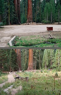 Before and after photos showing a parking area surrounded by sequoias, and the same area as a meadow after it was restored.