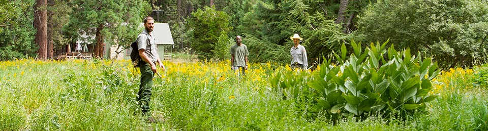 Volunteers and park employees stand in a meadow with weed eradication tools