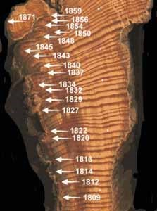 Tree cross-section with dates and locations of fire scars noted