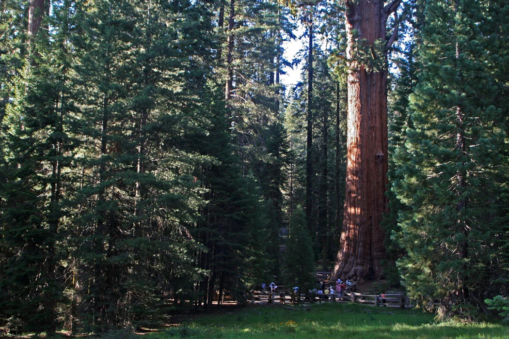 Find Your Park at Sequoia and Kings Canyon National Parks
