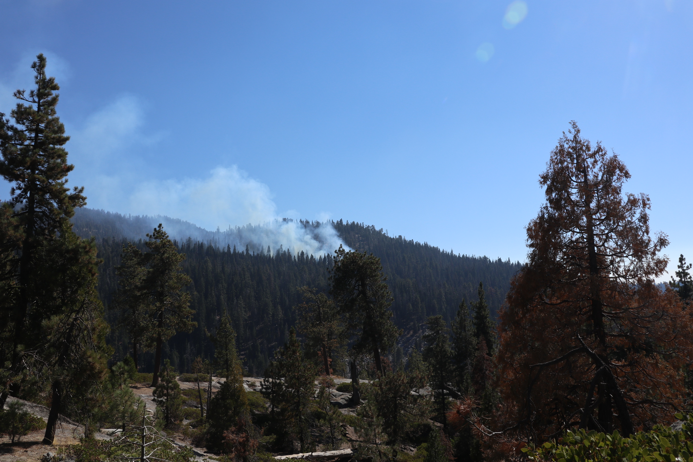 Smoke from the test fire of the Sherman Prescribed Burn is seen in a forest.