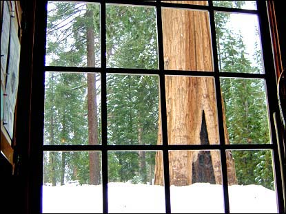 Winter view - Giant Forest Museum.-Photo SMB