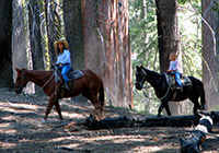 Two women travel through the forest on horseback