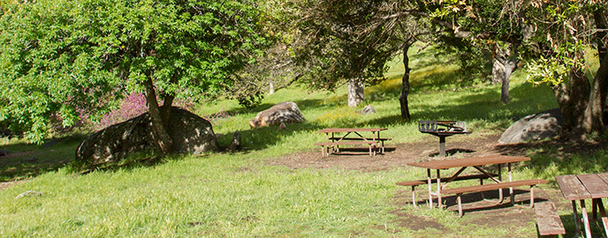 Picnic tables and a grill among green grass and oaks